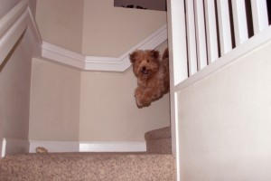 Dog Running Down Stairs